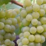 Detienen a ladrones de uvas