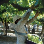 Finalizó la cosecha 2010