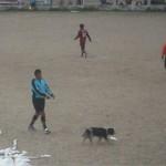 Perros, avispas, petardos, enojo con arbitros y oscuridad en la tercera del Clausura
