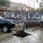 El viento volteó un árbol de la Plaza 20 de Febrero
