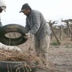 La última helada afectó 740 hectáreas de viñas