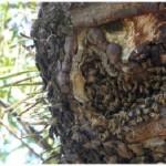 Una mujer quedó internada tras ser atacada por abejas