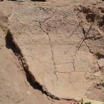 Hallazgo arqueológico en La Viña