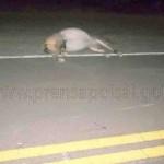 Murió un joven al chocar con su moto a un animal