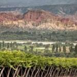 Destacan a Chañar Punco como nueva subzona vallista de vinos