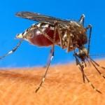 Confirmaron casos de chikungunya y dengue en Salta