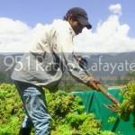 La cosecha de uva sobrepasó los 20 millones de kilos