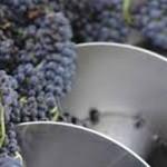 Por las heladas se perdieron cerca de 14 millones de kilos de uva
