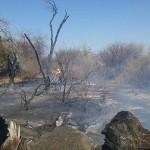 Incendio forestal en la zona norte