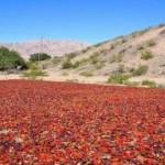 Declararon la emergencia agropecuaria en gran parte del Valle Calchaquí