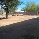 Sacaron la basura acumulada en un predio cercano a la Municipalidad