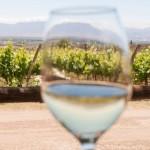 Salta sí podrá exportar vinos a Bolivia
