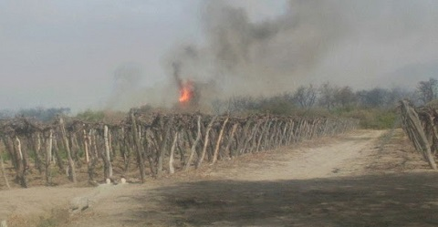 Las llamas estuvieron muy cerca de quemar viñedos de la zona