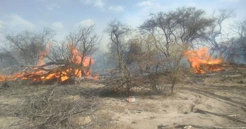 Las llamas quemaron cuatro hectáreas de monte nativo
