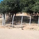 La usurpación intentaría apropiarse de las 32 hectáreas antes que asuman los nuevos concejales