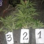Secuestraron marihuana y hay un detenido