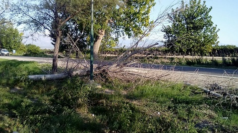 Preocupa el lamentable estado de muchos árboles de La Alameda